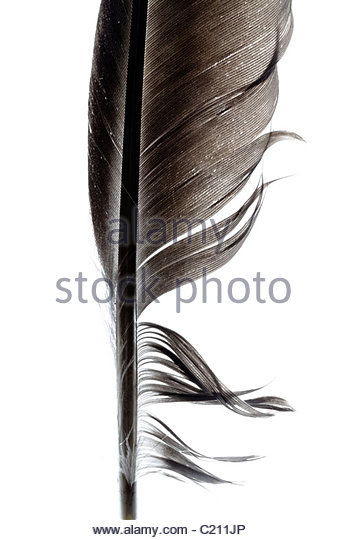 closeup black feather escorts