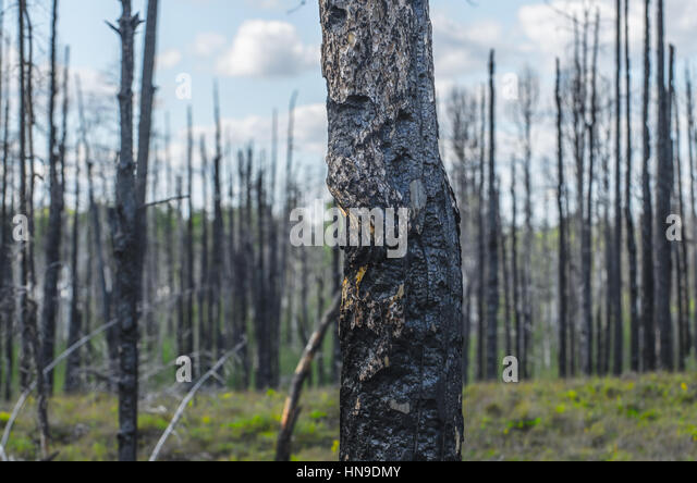 Wildfire Aftermath Stock Photos Amp Wildfire Aftermath Stock