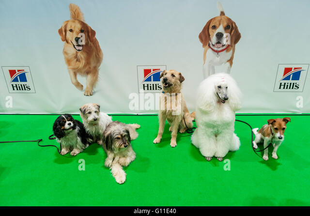 Pet Stock Annual Rescue Dog Day