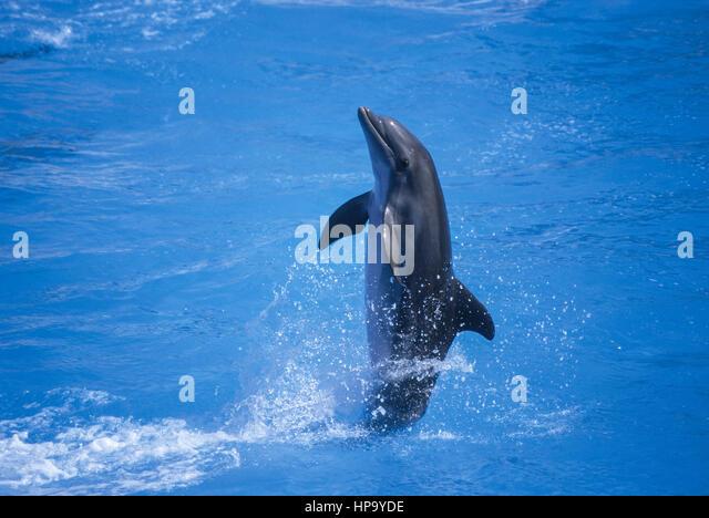 my delfinshow