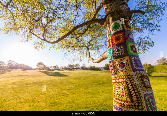 Yarn bombing on tree stock photos yarn bombing on tree for What is a tree trunk covered with 4 letters