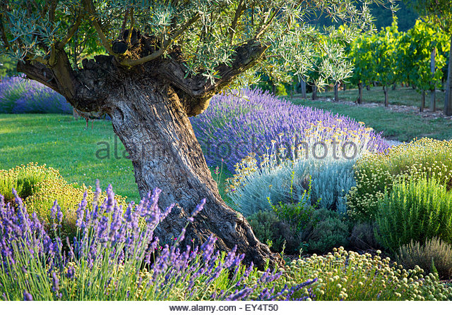 Evening Sunlight In French Garden In The Lot Valley, Midi Pyrenees, France