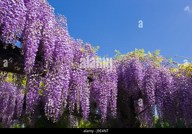 Blue, Park, Garden, Bloom, Blossom, Flourish, Flourishing, Romantic,