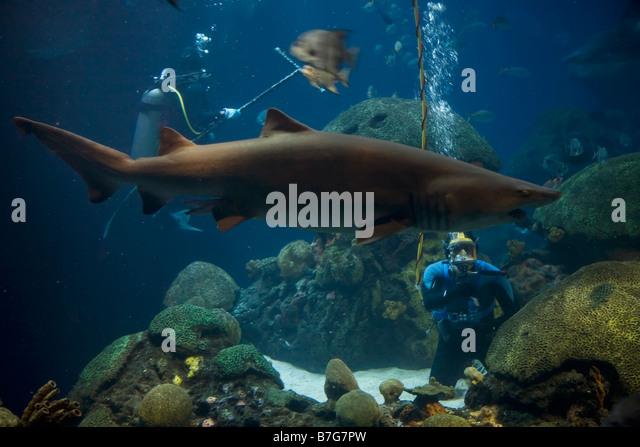 Tennessee Aquarium Stock Photos Tennessee Aquarium Stock