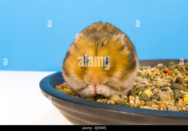 how to draw a hamster food bowl