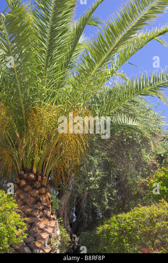 Palm beach gardens stock photos palm beach gardens stock images alamy Starbucks palm beach gardens