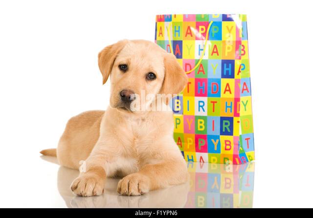 Golden Retriever Lover Birthday Cake