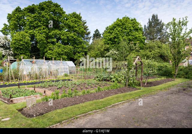 Bed Strawberries In Garden Growing Stock Photos Bed Strawberries In Garden Growing Stock