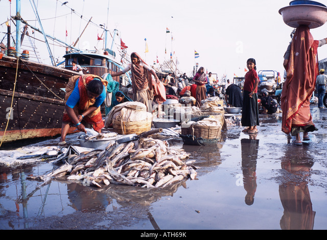 fish market diu gujarat stock photos fish market diu