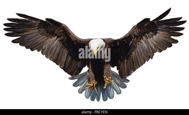 Swoop Cut Out Stock Images & Pictures - Alamy