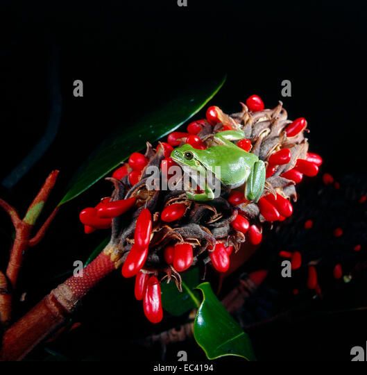 mimicry stock photos amp mimicry stock images alamy