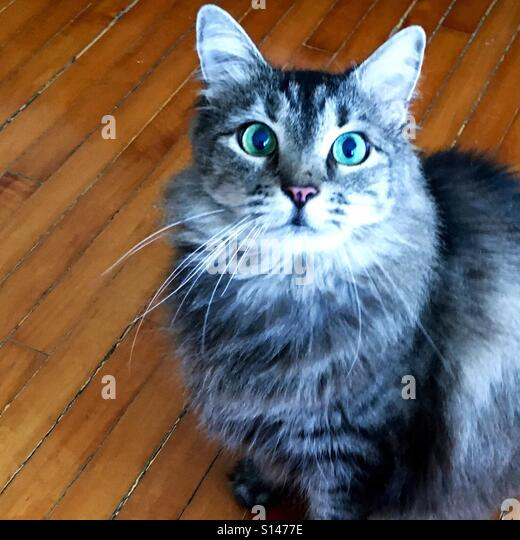 498941591 Better Facial Expressions Than Human Funny Cat Surprised Face: Surprised Cat  Not Face Stock Photos & Surprised Cat Not