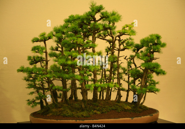Bonsai Gardens Stock Photos Bonsai Gardens Stock Images Alamy