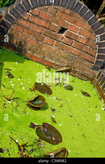 Red brick pond stock photos red brick pond stock images for Garden pool duckweed