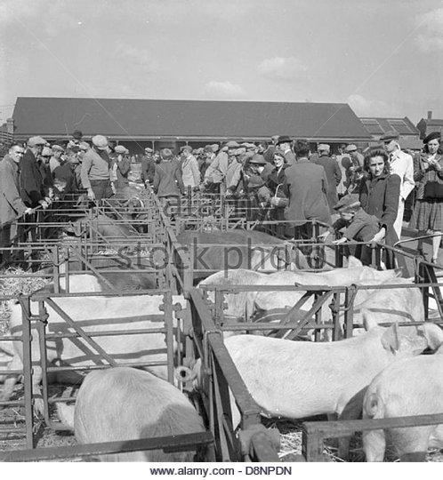 talybont on usk livestock market
