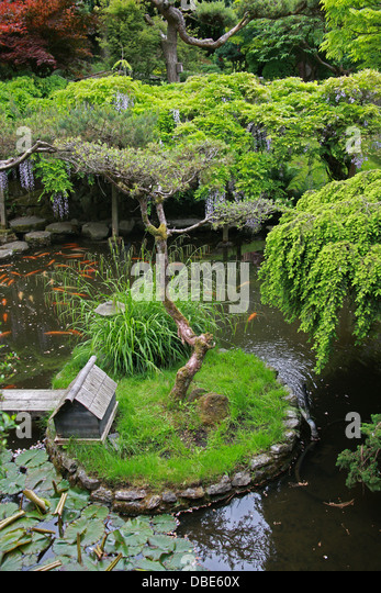 Koi carp uk stock photos koi carp uk stock images alamy for Japanese garden san jose koi fish