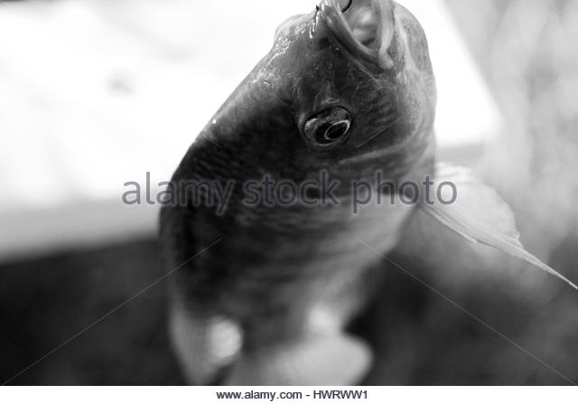 Hook and eye stock photos hook and eye stock images alamy for Fish eye hook