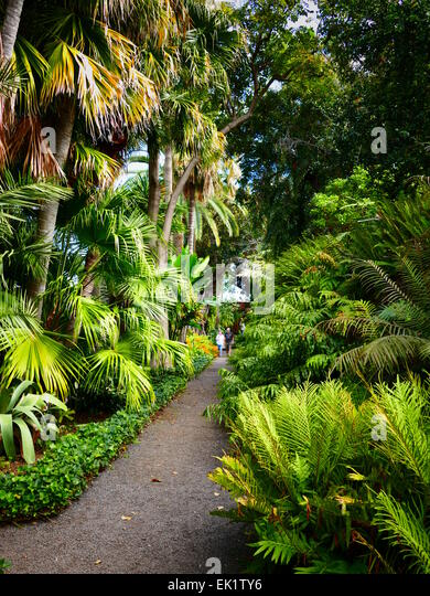 Jardin botanico tenerife canary islands stock photos jardin botanico tenerife canary islands - Botanical garden puerto de la cruz ...
