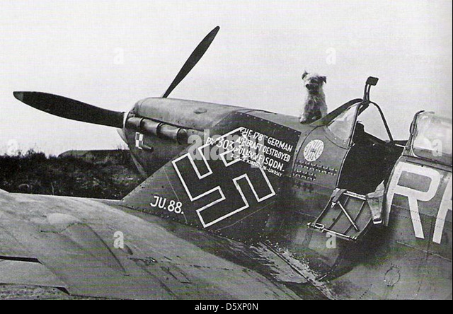 303 Polish Squadron Stock Photos & 303 Polish Squadron Stock ...