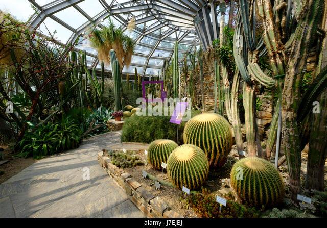 Beau Cactus Display In Greenhouse At Berlin Botanical Garden In Dahlem, Berlin,  Germany   Stock
