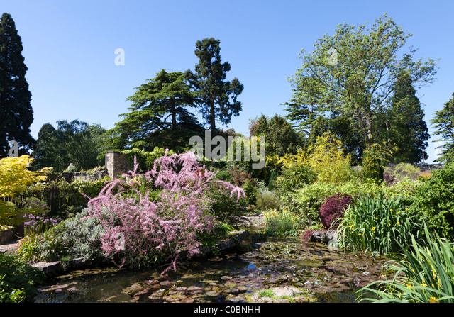 Pond plants uk stock photos pond plants uk stock images for Garden pond plants uk