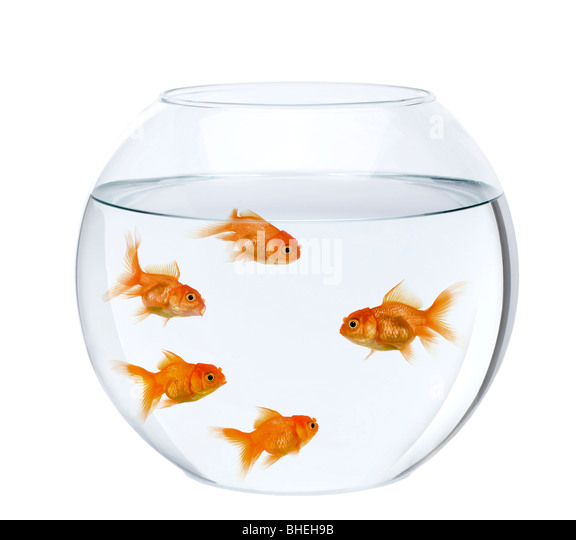 Bowl of water for pet stock photos bowl of water for pet for Fish bowl pets