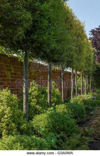 Contemporary Garden Buxus Modern Stock Photos