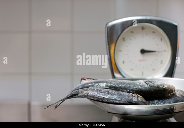 Fish weight stock photos fish weight stock images alamy for Fish weight scale