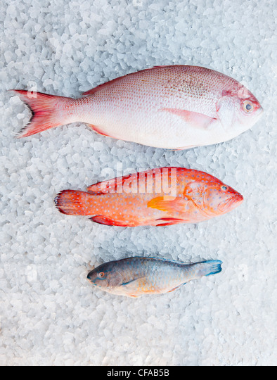 Red snapper fish stock photos red snapper fish stock for Types of red fish