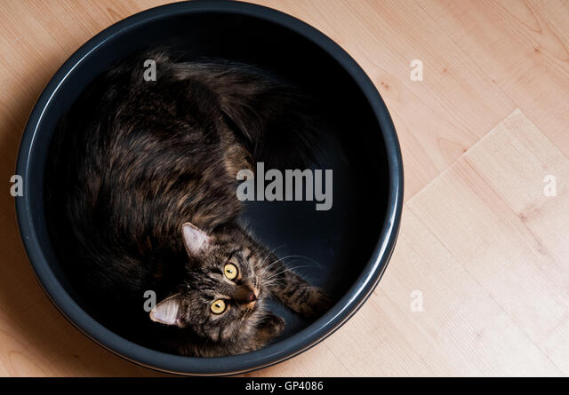 Cat Knocking Over Food Bowl
