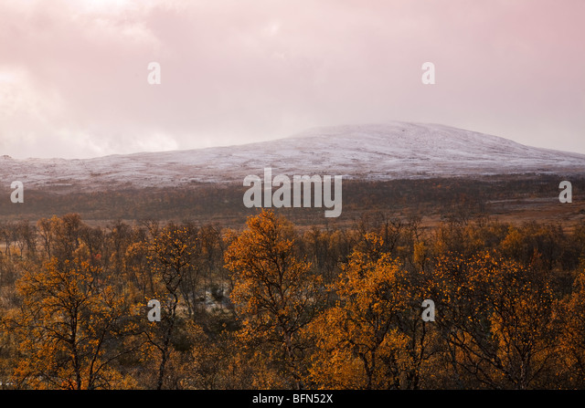 Gumtree Dating Sydney