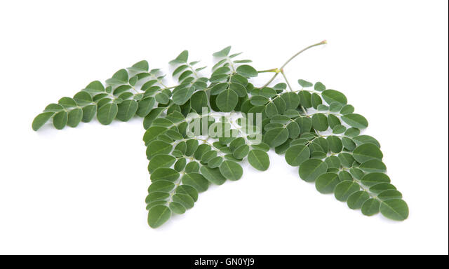 """malunggay moringa olifeira seeds as capsules for hypertension The plant moringa oleifera is very popular (locally known as  """"the leaves,  flowers, seeds, pods, roots, bark, gum, and seed oil from the moringa (malunggay ) plant are  anti-diabetic, anti-hypertensive, anti-inflammatory, anti-microbial,   the roots are often ground down for use in supplement capsules."""