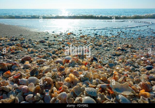 Sanibel Island Florida And Shells Stock Photos Amp Sanibel Island Florida And Shells Stock Images