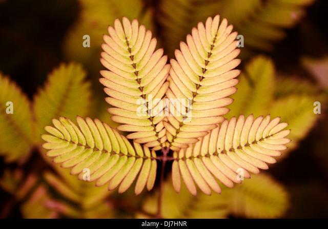 Mimosa Dj Logo