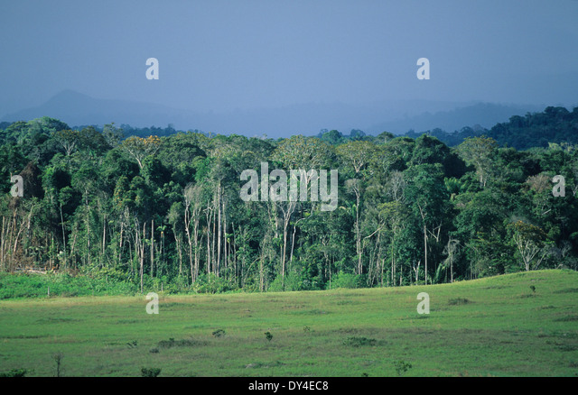 tropical rainforests vs tropical grasslands Since the tropical rainforest showed most of the characteristics needed for a plant individual to diversify, we can conclude that the tropical rainforest is more diverse and exhibits higher species richness than the tropical grassland ecosystem.