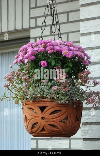 Flowers For Hanging Baskets In Winter : Winter hanging basket stock photos
