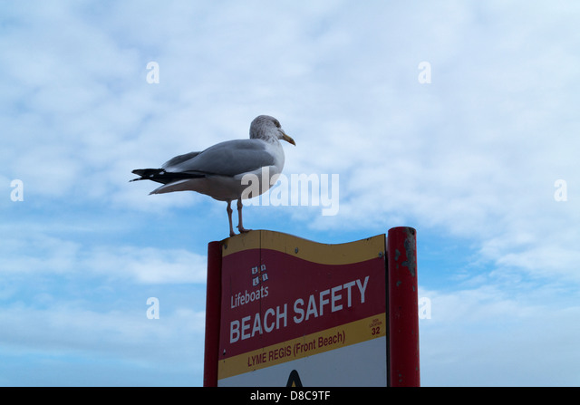 Seagull Sign Stock Photos Amp Seagull Sign Stock Images Alamy