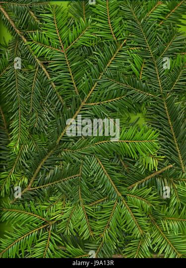 branches, design, shaping, formation, shape, model, figure, structure, - Stock Image