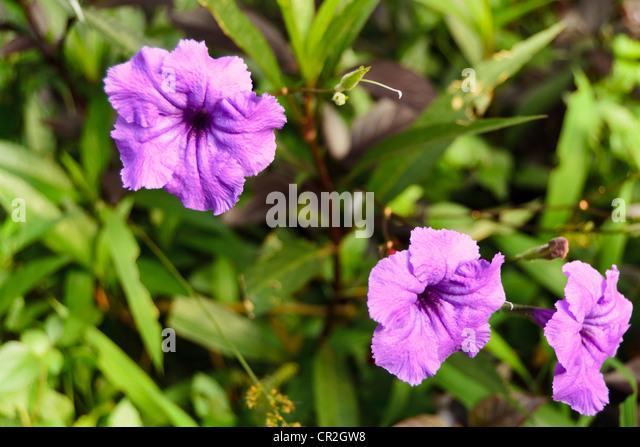 violet tropical flower stock photos  violet tropical flower stock, Natural flower