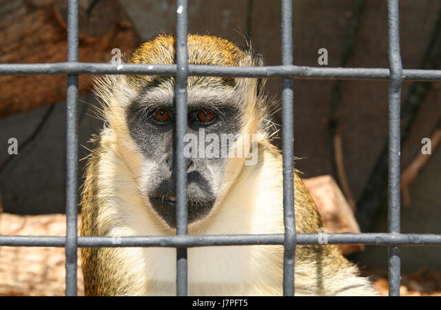 are zoos internment camps for animals Online assignment - free download as pdf file (pdf) zoos can be internment camps for animals, but also a place of refuge a zoo can be considered an internment camp due the insufficient enclosures that the animals have to live in.