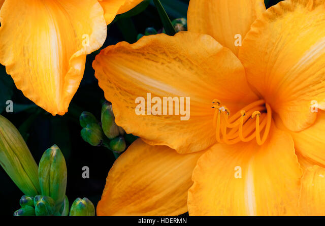 orange exotic flower stock photos  orange exotic flower stock, Natural flower