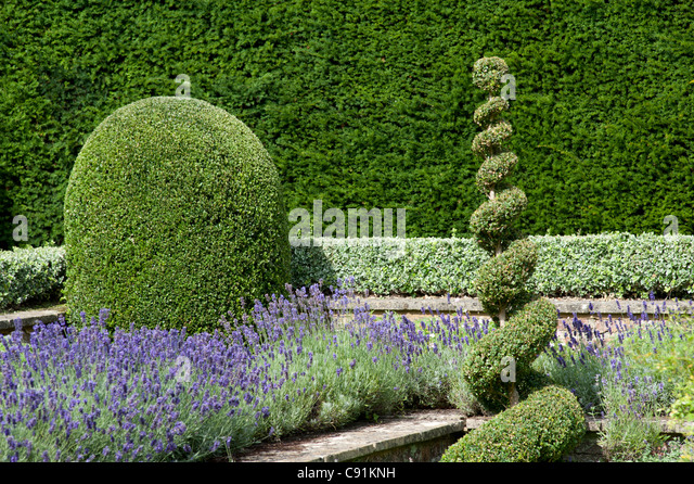 Formal Garden Design pinterest formal gardens formal garden design and landscape design Formal Garden Design Showing Symmetrical Planting And Topiary Work Surrey Uk Stock Image