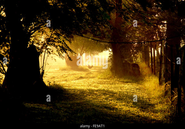 evil landscape stock photos evil landscape stock images alamy. Black Bedroom Furniture Sets. Home Design Ideas