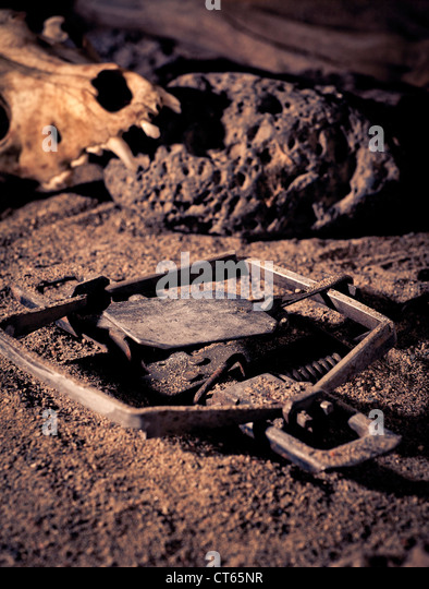 Leghold Stock Photos Amp Leghold Stock Images Alamy