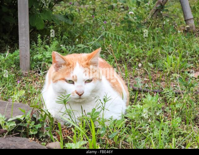 Cat In Backyard ginger cat in backyard stock photos & ginger cat in backyard stock