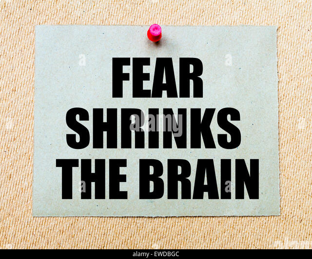 "phobias and the brain essay For a long time, it was assumed that emotions, including fear and anxiety, were almost exclusively generated or processed in a ""primitive"" part of the brain, ie, the limbic system (""the emotional brain""."