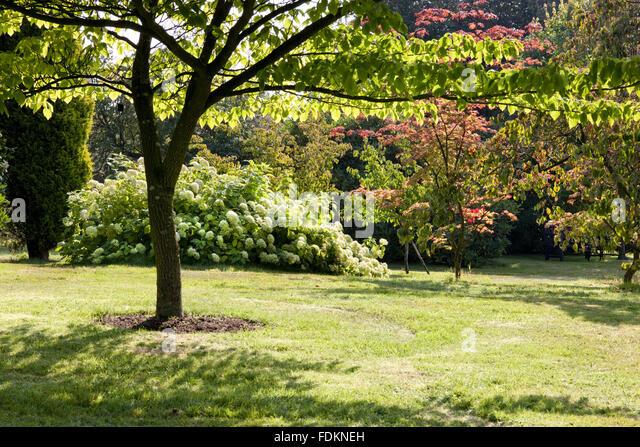Kent england garden stock photos kent england garden for Garden trees kent