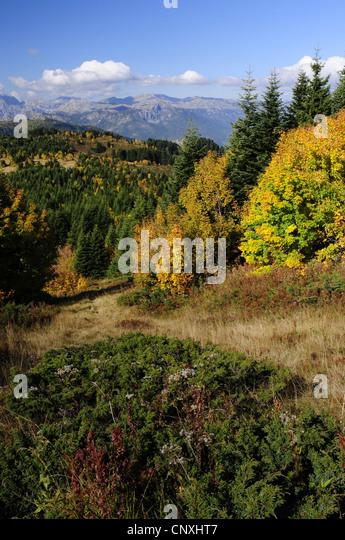 mountain meadow autumn above - photo #25
