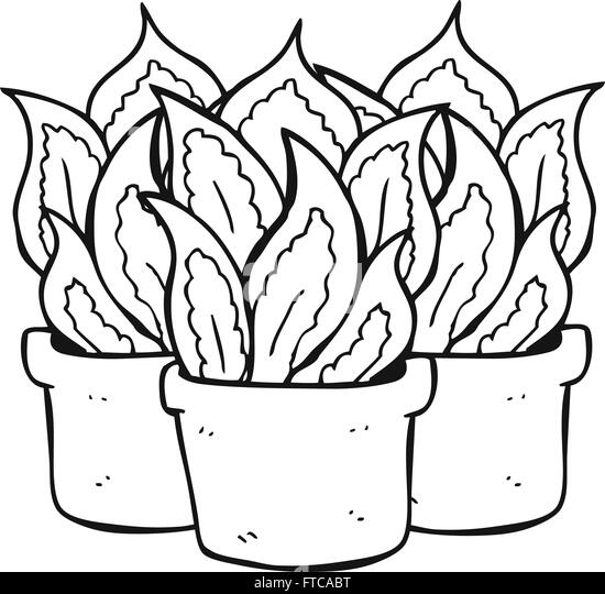 house plants drawing. freehand drawn black and white cartoon house plants stock image drawing