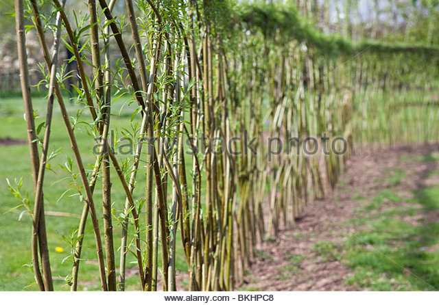 Willow Fence Pattern Stock Photos Willow Fence Pattern Stock Images A